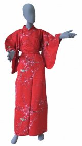 Ladies' Japanese Kimono -ume uguisu- Red, Cotton, Medium / Plum & bush warbler